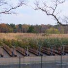 Nieuwe productie bomen
